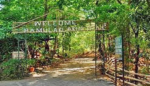 Pamulaklakin Trail